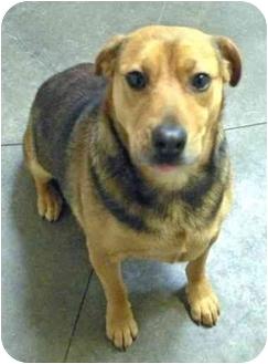 German Shepherd Dog/Hound (Unknown Type) Mix Dog for adoption in Fort Bragg, California - Heidi
