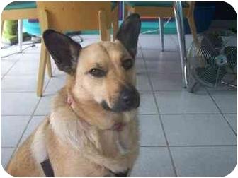 German Shepherd Dog Mix Dog for adoption in Poway, California - Chaquita