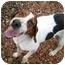 Photo 1 - Treeing Walker Coonhound Dog for adoption in Columbus, Nebraska - Joe