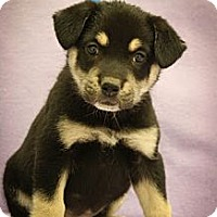 Adopt A Pet :: Trudy - Broomfield, CO