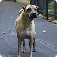 Adopt A Pet :: Zeppelin - Gainesville, FL