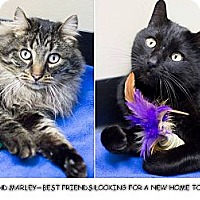 Adopt A Pet :: Tosh & Marley - Chicago, IL