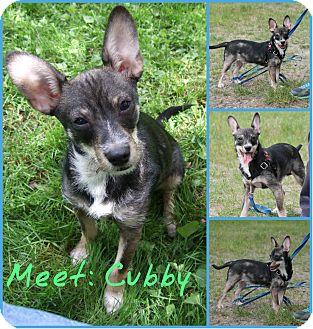 Schnauzer (Miniature)/Wirehaired Fox Terrier Mix Dog for adoption in Spokane, Washington - Cubby