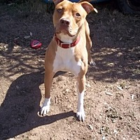 Adopt A Pet :: Nacho - Bakersfield, CA