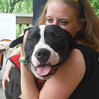 Adopt A Pet :: Oso- URGENT!!! - Cool Ridge, WV