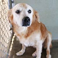 Adopt A Pet :: Emily, Senior Discount! - St. Louis, MO