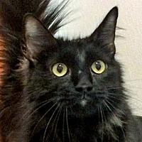 Adopt A Pet :: Sam - Prescott, AZ
