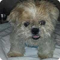 Adopt A Pet :: Lucky Boy - Freeport, NY