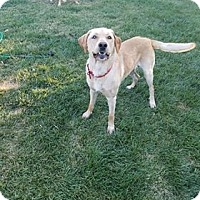 Adopt A Pet :: Charlie - Salem, OR