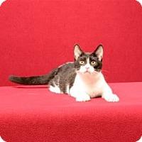 Adopt A Pet :: Luke Spencer - Cary, NC