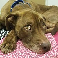 Adopt A Pet :: OSBOURNE - Albany, NY