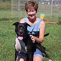 Adopt A Pet :: Pearl - Elyria, OH