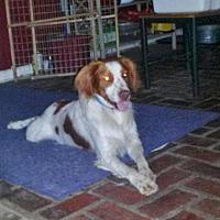 Adopt A Pet :: FL/Buddy -Pending - Marietta, GA