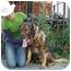 Photo 3 - German Shepherd Dog Mix Dog for adoption in Los Angeles, California - Boris von Lancaster