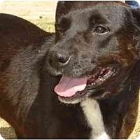 Adopt A Pet :: HAPPY - Phoenix, AZ