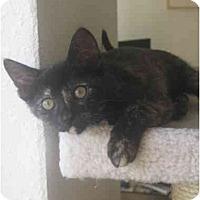 Adopt A Pet :: Anaca - Davis, CA
