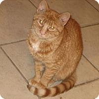 Adopt A Pet :: Merrill - Portland, ME