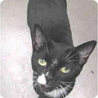 Adopt A Pet :: Cleopatra - Mesa, AZ