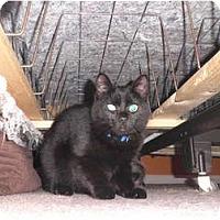 Adopt A Pet :: Leila - Warren, MI