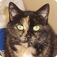 Adopt A Pet :: Ellie - Germansville, PA