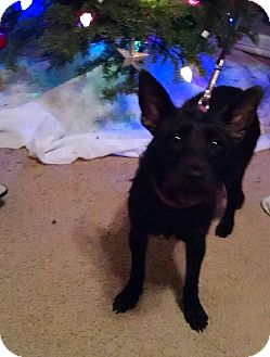 Terrier (Unknown Type, Small) Mix Dog for adoption in Brownsville, Texas - Pixie