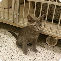 Adopt A Pet :: Anna - Phoenix, AZ