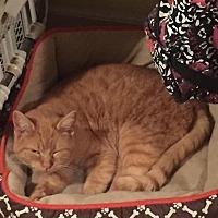 Adopt A Pet :: Duncan - North Branch, MI
