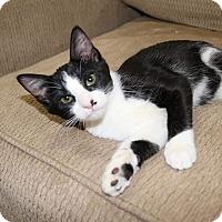 Adopt A Pet :: Wrigley - Edmond, OK