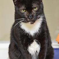 Adopt A Pet :: Domino 11725 - Atlanta, GA