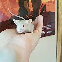 Adopt A Pet :: Basil - St. Paul, MN