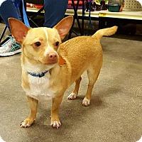 Adopt A Pet :: Wilbur - Irving, TX