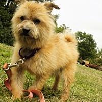 Adopt A Pet :: Sydney - Sparta, NJ