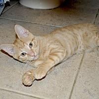 Adopt A Pet :: Ginger *Playful! - New Smyrna Beach, FL