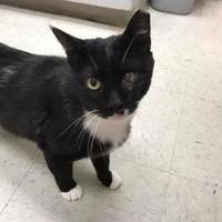 Adopt A Pet :: Blaze - Baltimore, MD