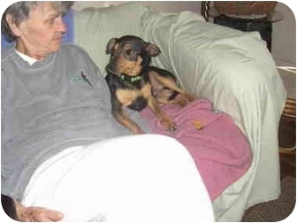 Dachshund/Miniature Pinscher Mix Dog for adoption in all of, Connecticut - Doc