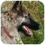 Photo 3 - German Shepherd Dog Mix Dog for adoption in Los Angeles, California - Tara von Teitelbaum