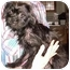 Photo 4 - Lhasa Apso/Terrier (Unknown Type, Small) Mix Puppy for adoption in North Judson, Indiana - Harriet