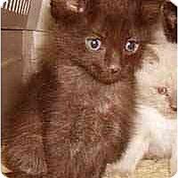Adopt A Pet :: Cocoa - Dallas, TX