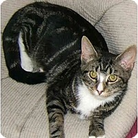 Adopt A Pet :: Tabitha the lovingTabby! - New York, NY