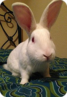 New Zealand Mix for adoption in Watauga, Texas - Mr. Noodle