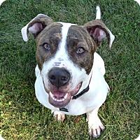 Adopt A Pet :: Rocky - Clarksburg, MD