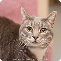 Adopt A Pet :: Kitters - Fountain Hills, AZ