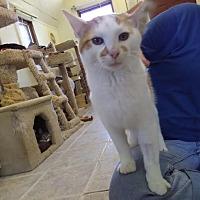 Adopt A Pet :: ZEPPELIN! - Owenboro, KY
