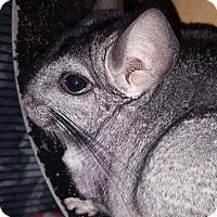 Adopt A Pet :: Smokey - Patchogue, NY