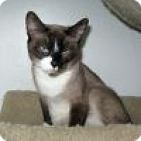 Adopt A Pet :: Malee - Powell, OH