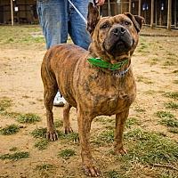 Adopt A Pet :: Ol' Moma - Jasper, AL