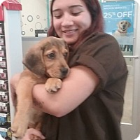 Adopt A Pet :: Florence - Shelter Island, NY