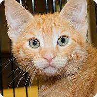 Adopt A Pet :: Races - Irvine, CA