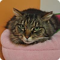 Adopt A Pet :: Sarabri - Kettering, OH