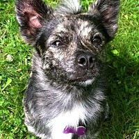 Adopt A Pet :: Picasso - Youngstown, OH